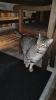 Katze sucht Besitzer